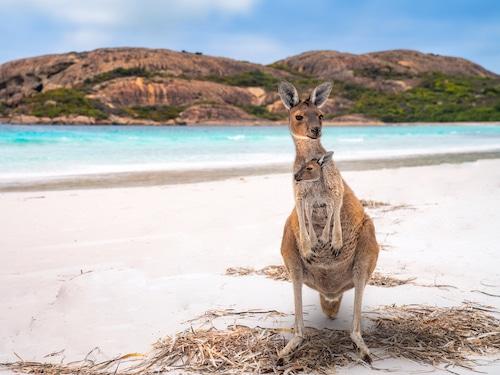 Séjour Australie Pacifique Avenue des Voyages