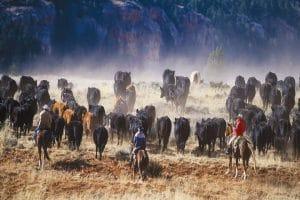 A cheval dans un ranch au pays de Buffalo Bill 6