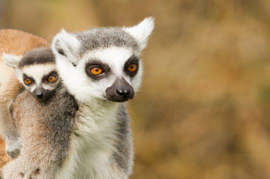 Circuit au Nord de Madagascar et séjour à Nosy Be 7