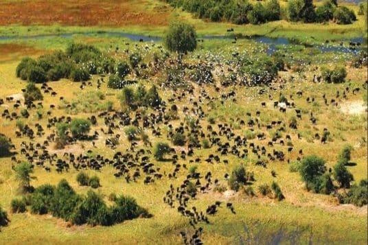 Circuit privé Botswana et Chutes Victoria 2