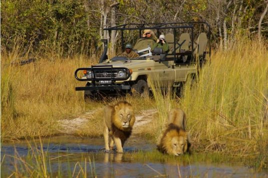 Circuit privé Botswana et Chutes Victoria 3