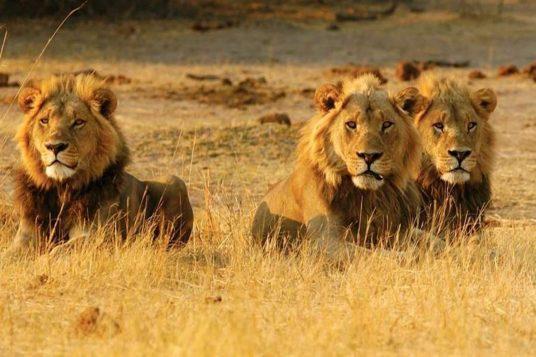 Circuit privé Botswana et Chutes Victoria 4