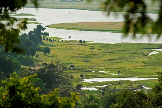 Circuit privé Botswana et Chutes Victoria 5