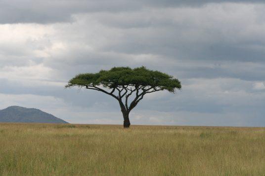 Culture et Patrimoine en Tanzanie guide privé et Zanzibar 2