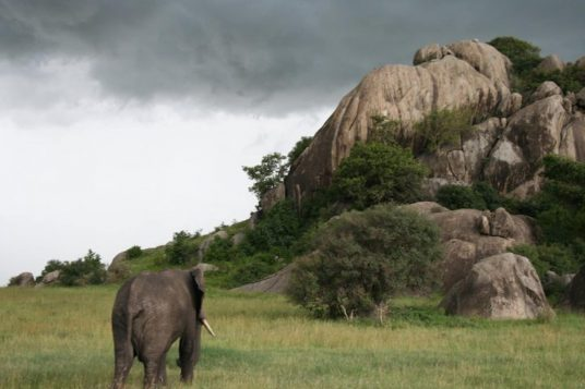 Culture et Patrimoine en Tanzanie guide privé et Zanzibar 5