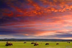 Dansez avec les loups Utah Colorado Wyoming en voiture 3