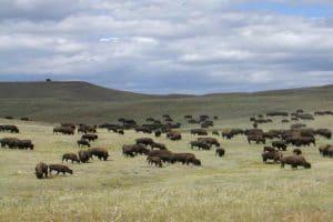 Dansez avec les loups Utah Colorado Wyoming en voiture 6