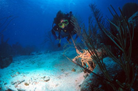 Les Iles Vierges Exclusives 4