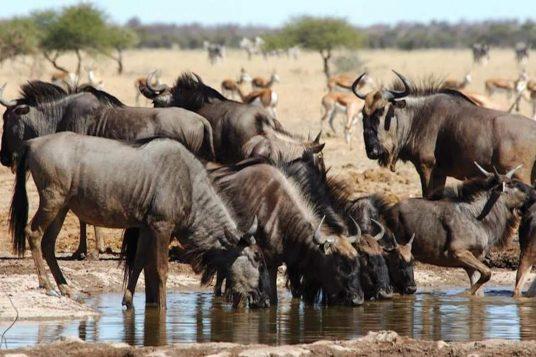 Namibie Botswana Chutes Victoria 11 1