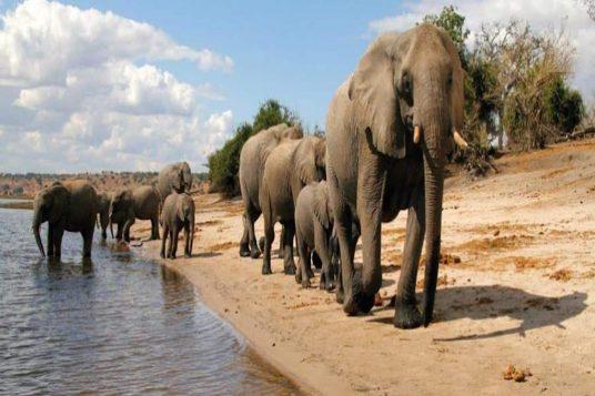 Namibie Botswana Chutes Victoria 12 1