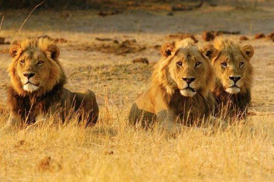 Namibie Botswana Chutes Victoria 15 1