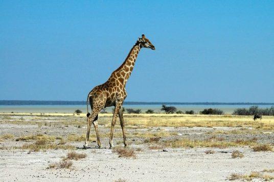 Namibie et Chutes Victoria 11