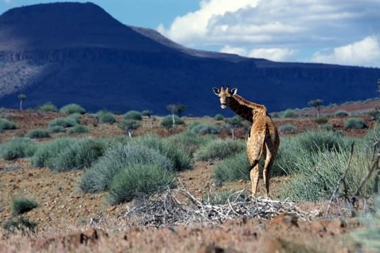 Namibie et Chutes Victoria 13