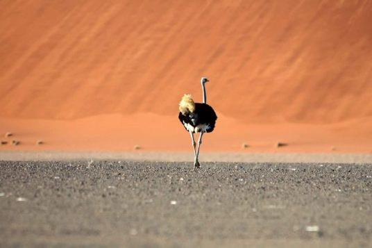 Namibie et Chutes Victoria 3