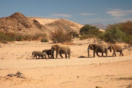 Namibie et Chutes Victoria 7