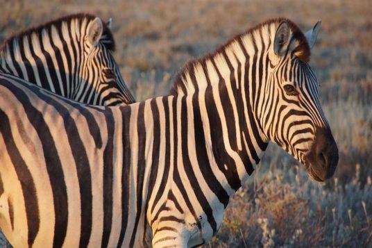 Namibie et Chutes Victoria 8
