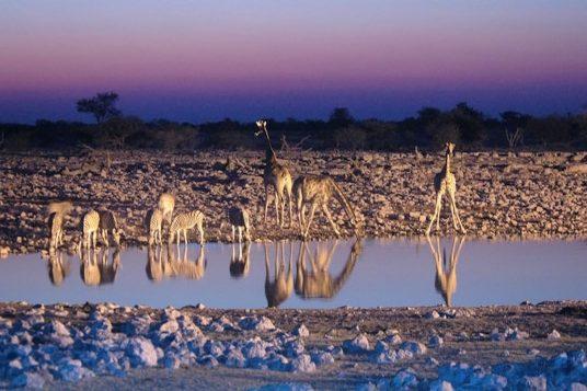 Namibie et Chutes Victoria 9