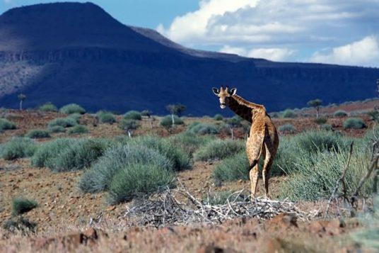Safaris en avion privé en Afrique Australe Namibie Botswana Caprivi les Chutes Victoria 3