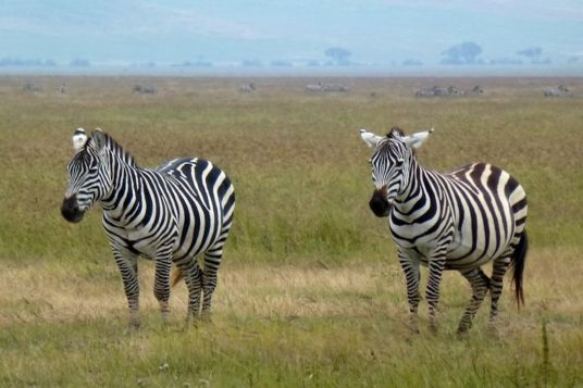 Voyage en Tanzanie et Zanzibar 4