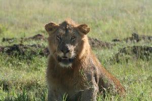 Voyage en Tanzanie et Zanzibar 5