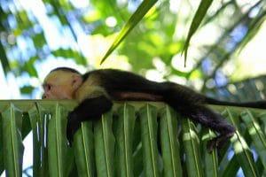 Bien être au Costa Rica 6
