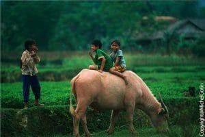 Circuit au Vietnam – Du Sud au Nord 10