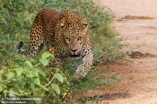 Circuit découverte du Sri Lanka 11