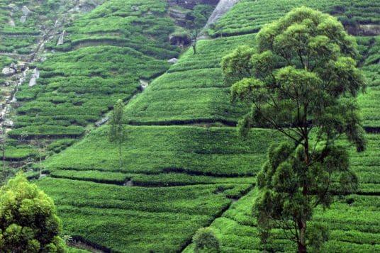 Circuit découverte du Sri Lanka 8