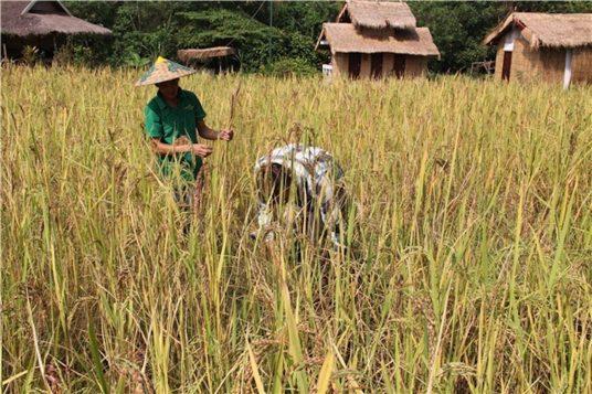 Circuit hors de sentiers battus au Laos 14