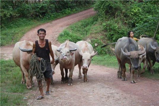 Circuit hors de sentiers battus au Laos 7