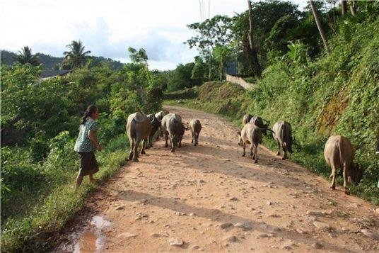 Circuit hors de sentiers battus au Laos 8