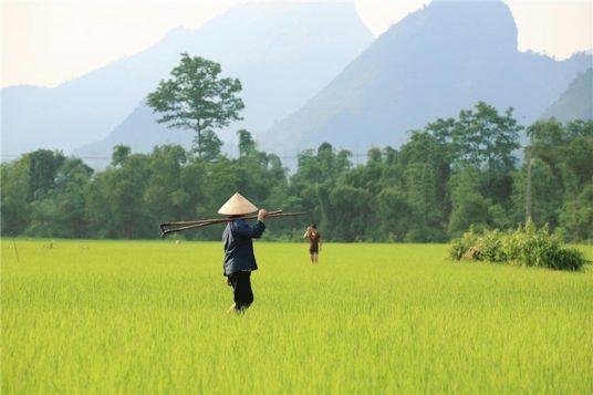 Découverte du Vietnam au contact des Vietnamiens 5