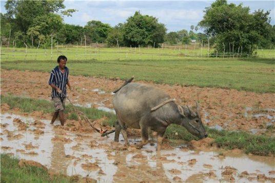 Le Laos en étapes de charme 13