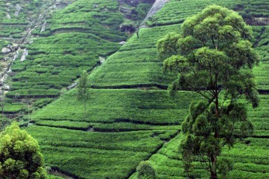 Le Nord Est du Sri Lanka 10