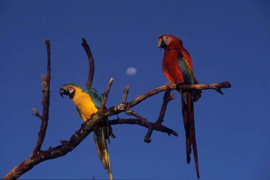 Le Pérou hors des sentiers battus du désert à lAmazonie 15