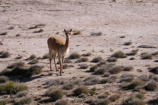 Le Pérou hors des sentiers battus du désert à lAmazonie 6