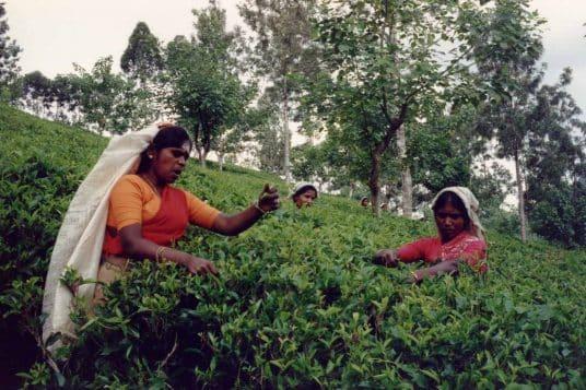 Le Sri Lanka culturel et balnéaire 2