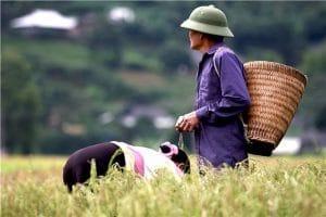 Les Rencontres sauvages au nord ouest du Vietnam 5
