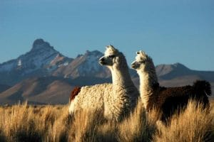 Pérou Hors du temps Lima Cusco Puno 9