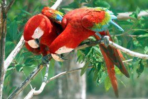 Voyage au cœur de l'Amazonie 2
