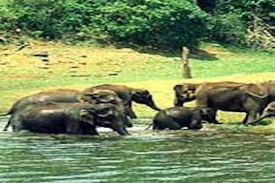 Voyage combiné Inde du sud et Sri Lanka 6