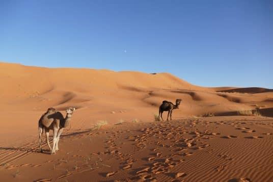 merzouga Maroc sud